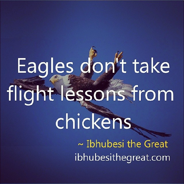 eagles-and-chickens