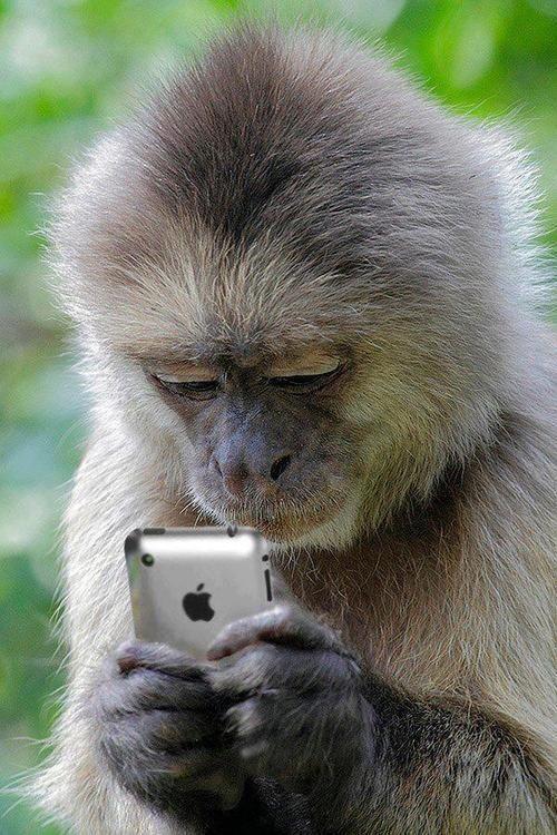 texting-monkey.jpg